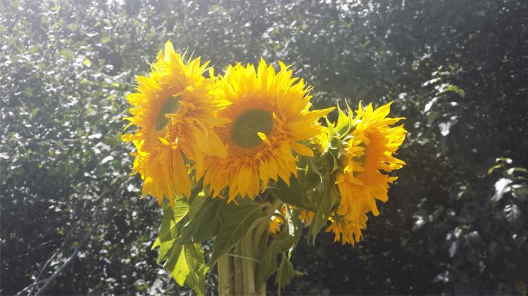 Triple Wren Farm's Flowers