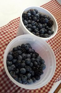 Bellingham WA Farmers Market: Fresh Blueberries and Blackberries